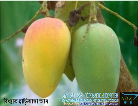 Mango Hari Vanga (হাঁড়ি ভাঙা আম)- রংপুর